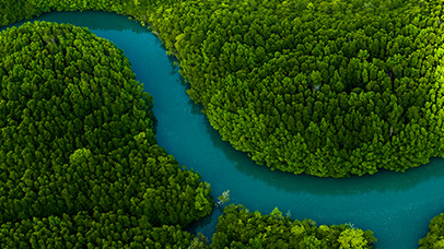 Aerial view river through forest