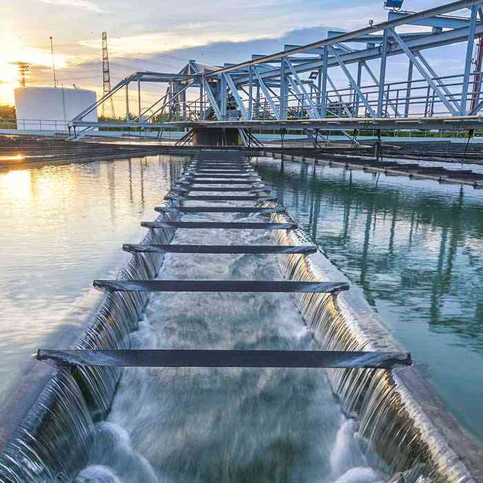 image of a water plant near sunset